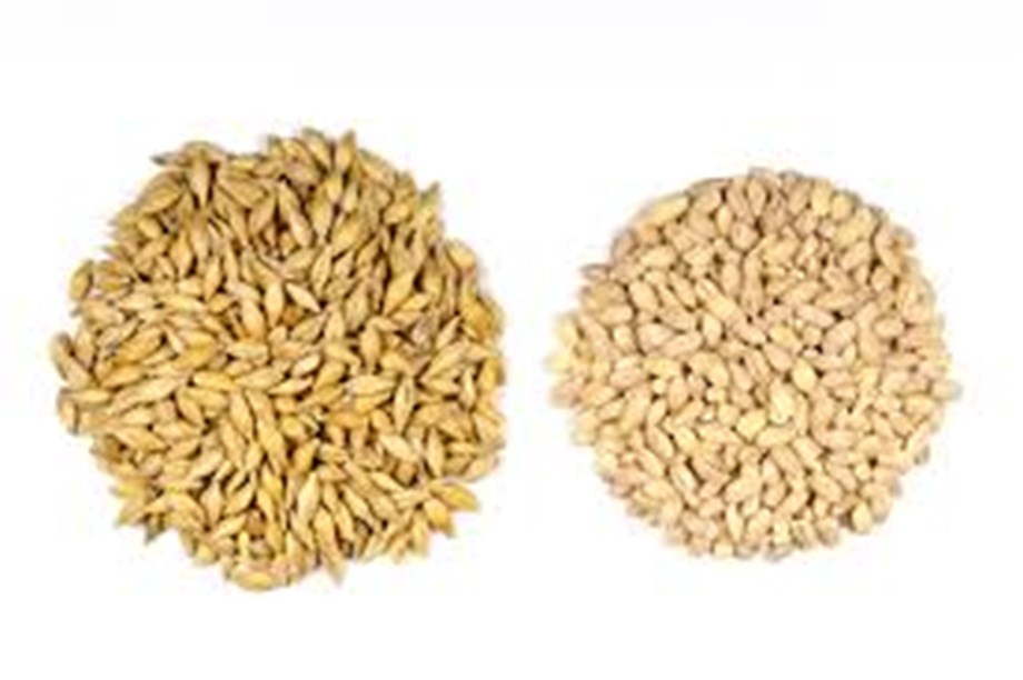 Barley futures rise on positive spot demand