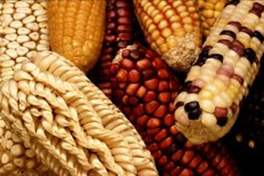 Maize futures ease on subdued physical cues