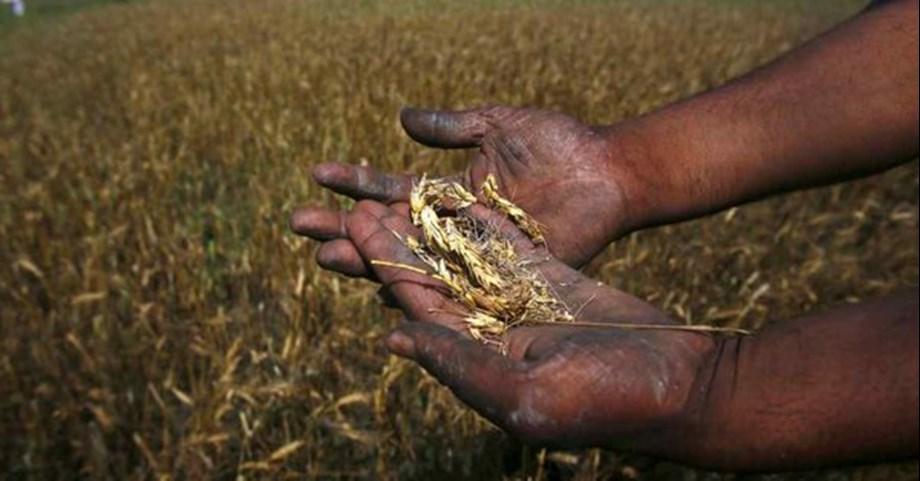 Telangana expected to procure 30 lakh tons of paddy during Kharif season