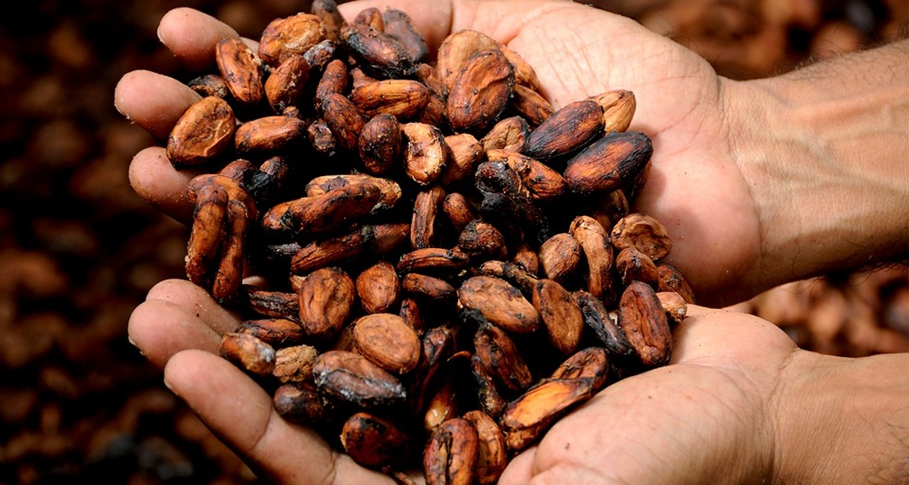 Reversing Africa's cocoa paradox; Why Easter celebration signals a call to action