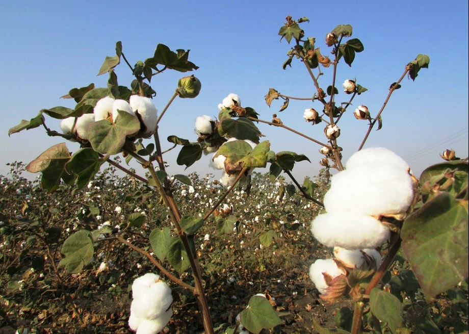 China cotton association to request waiver from import tariffs on U.S. uncombed cotton