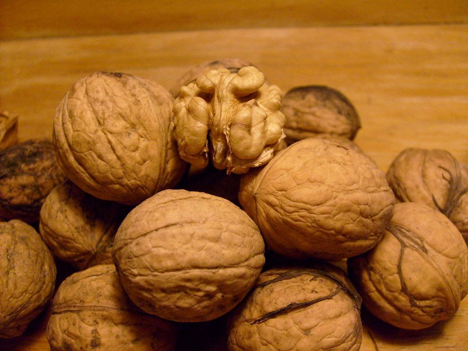 Odd News SRoundup: Squirrels' stash of winter walnuts causes car chaos