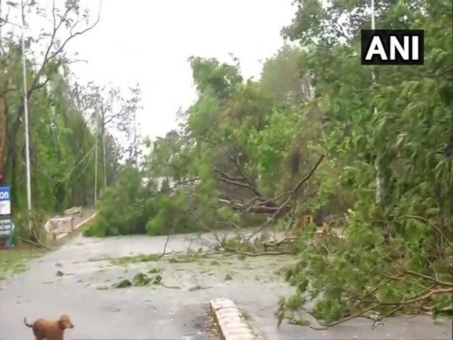 Odisha BJP urges Centre to provide special relief package for cyclone-hit coconut farmers