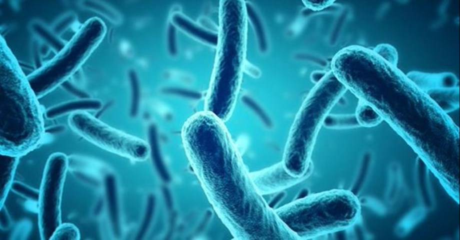 Bacteria in gut plays key role against arsenic toxicity
