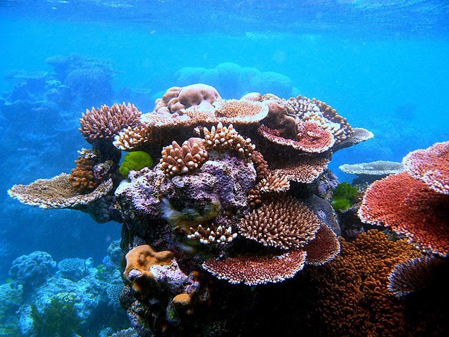 Thirty years of unique data reveal what's really killing coral reefs
