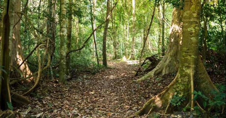 Conservationists, firms must start listening forests to tackle deforestation