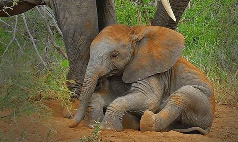 Elephant calf falls to death in Tamil Nadu forest