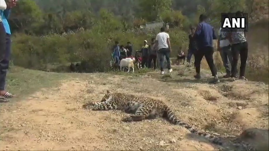 Leopard found dead in Pench Tiger Reserve