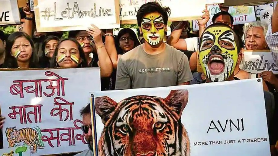 Gadkari defends killing of Tigress Avni after outrage; says it was last option
