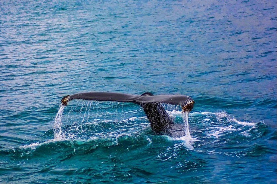 Science News Roundup: 'Thar she blows!' Scientists use drones to monitor whale health