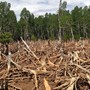 FACTBOX-Can global corporations meet 2020 no-deforestation pledge?