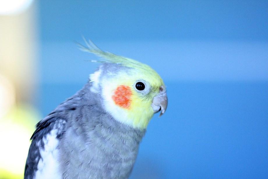 UPDATE 1-Bye-bye, birdie: Study finds North American birds getting smaller