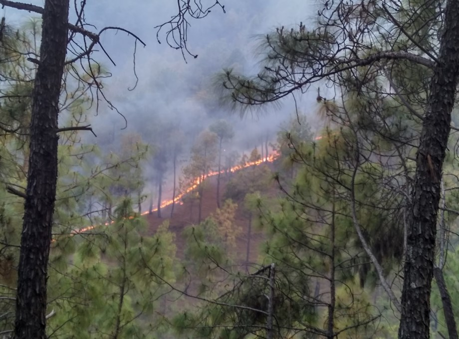 New study says forest fires impacts growth of trees due to climatic disturbance