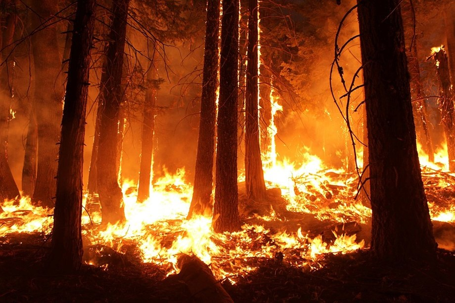 India's forest fires creating hindrance to meet its Climate Change goals