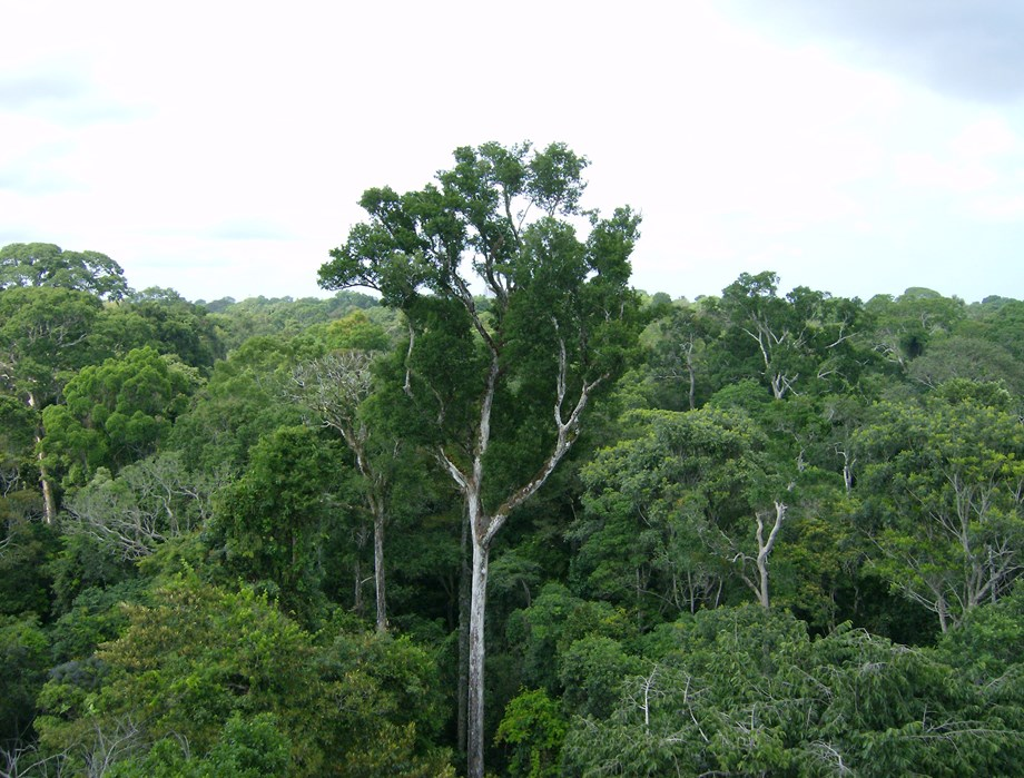 Encroachment of Assam's forest lands: Green bodies ask govt to act tough