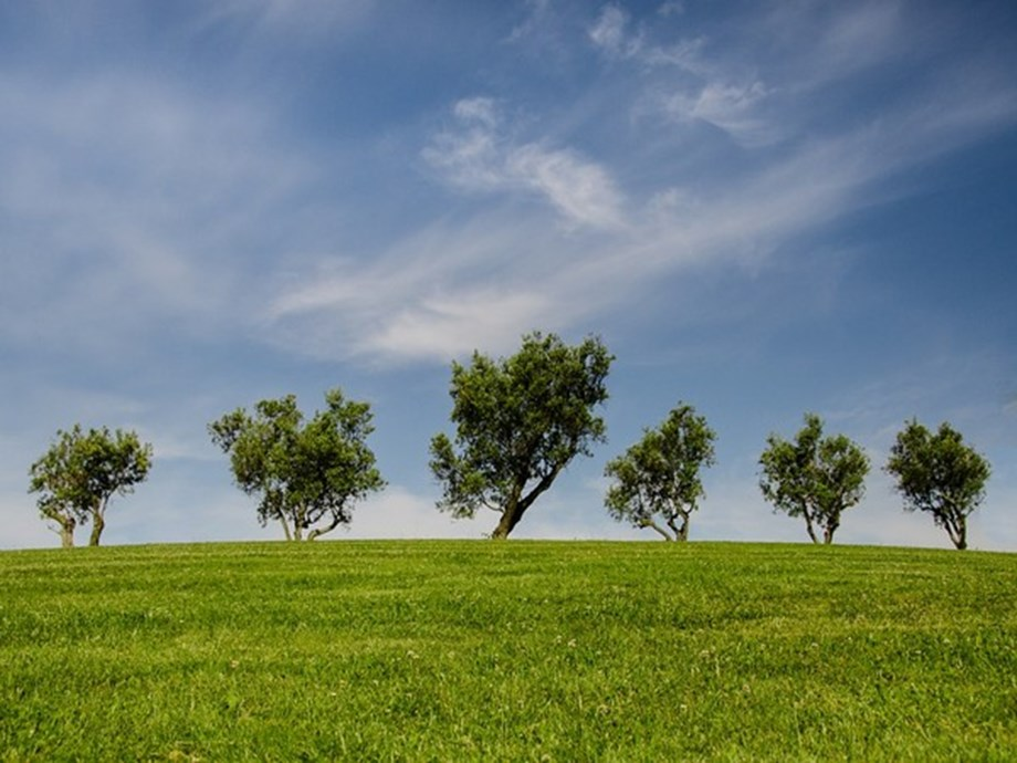 Trees - a feasible option for cutting down air pollution around factories