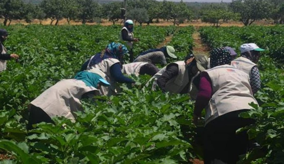 FAO trains Turkey-based Syrian refugees to develop skills, enhance employment chances