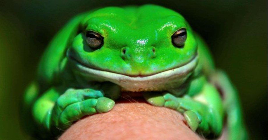 Odd News Roundup:'Frog ladders' help critters escape death-trap drains
