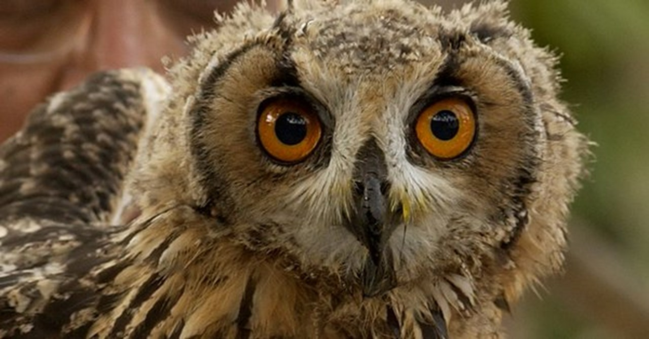 'Indian Owl Festival' showcases students artwork to aware about nocturnal bird