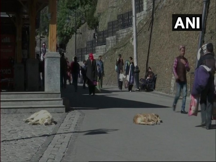 Himachal: SMC offers free parking, 100 pc discount on garbage bill for adopting stray dogs