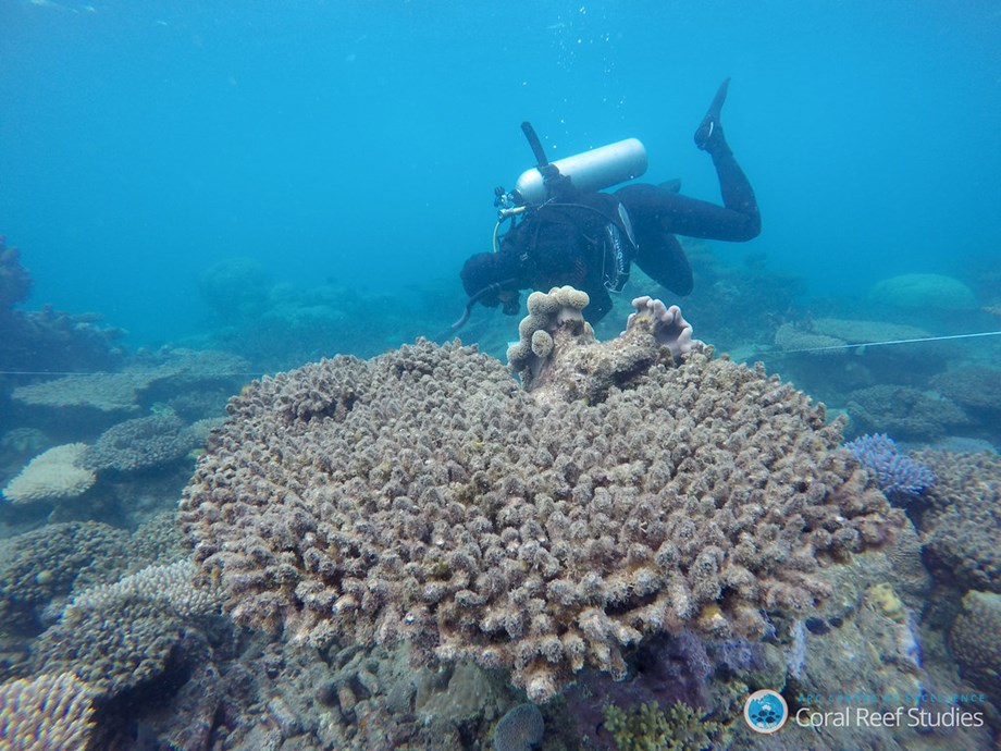 Global Fund for Coral Reefs to catalyze private sector investment blue economy - Devdiscourse