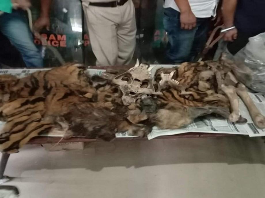 Assam: 3 arrested for possessing tiger hide, teeth, bones