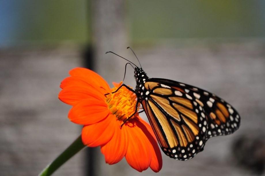 Arunachal: 105 butterfly species documented in Ziro meet