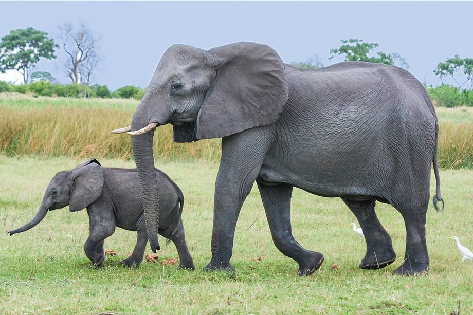 Six elephants translocated by Namibia to a tourism game park in Kinshasa