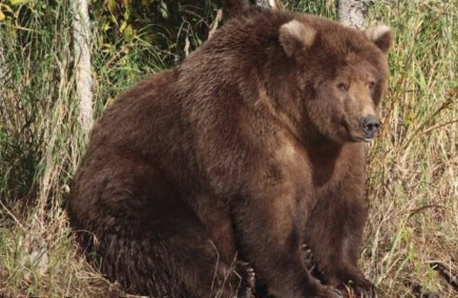 Odd News Roundup: Axe throwing takes aim at Los Angeles; 409 Beadnose 'fattest bear'