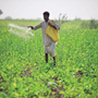 Farmers must cultivate crops able to resist environmental shocks: UN agency