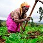 IFAD launches project to help farmers improve incomes, food security in Chad