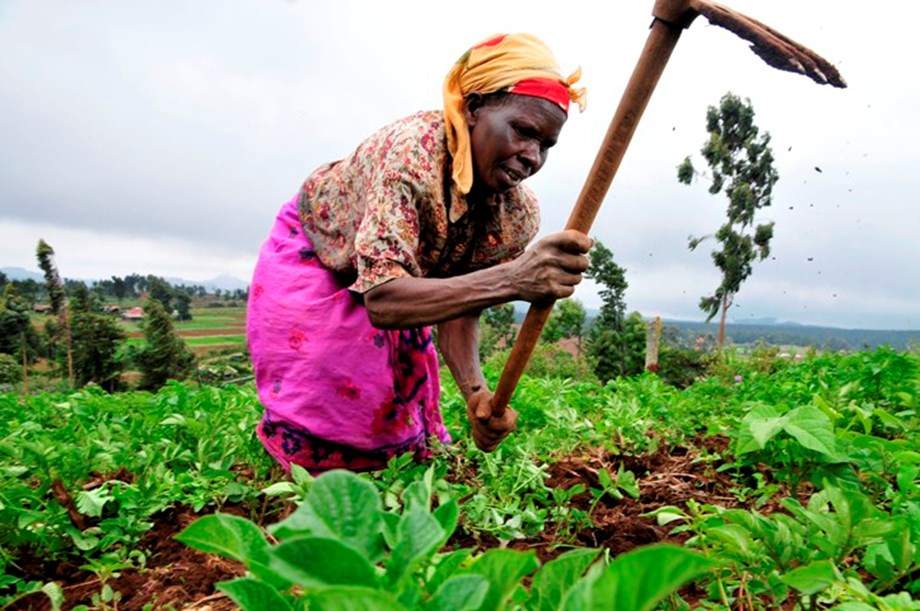 Building resilience FAO's key development priorities in Africa