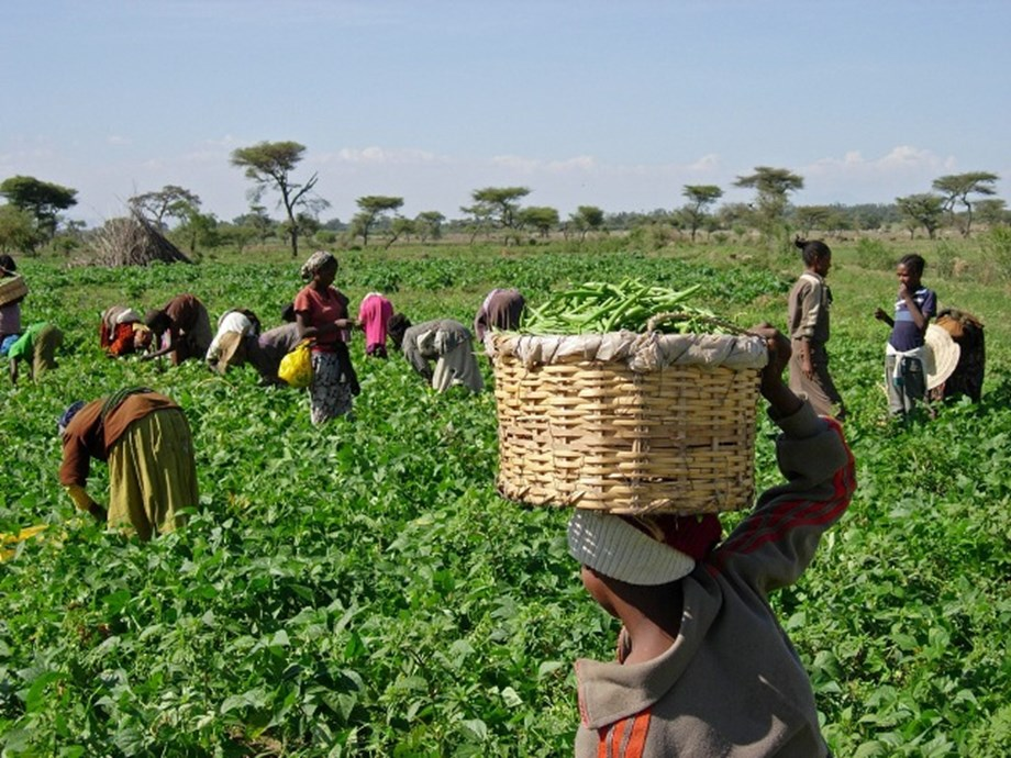 South Africa's Labour Department to invest R800 mln in agriculture
