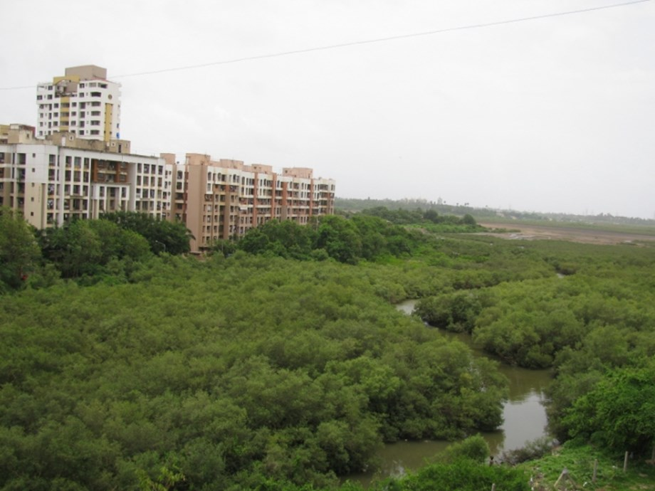 MMRDA gets nod to to cut mangroves for construct flyover