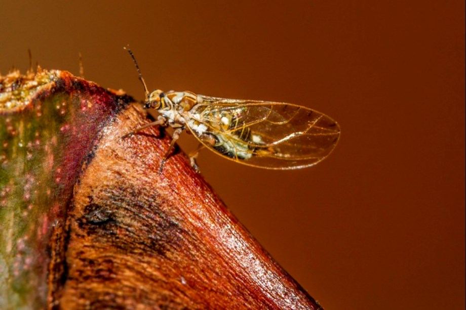 Discovery of two new insects suggest NZ may be home to more exotic insects