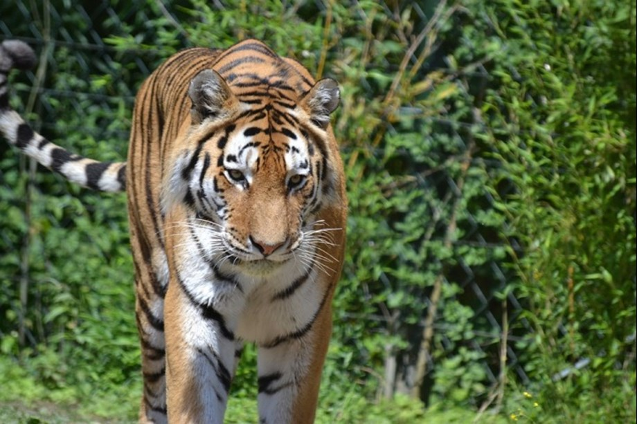 Animal Planet partners with Hyderabad metro to educate people for Tiger conservation