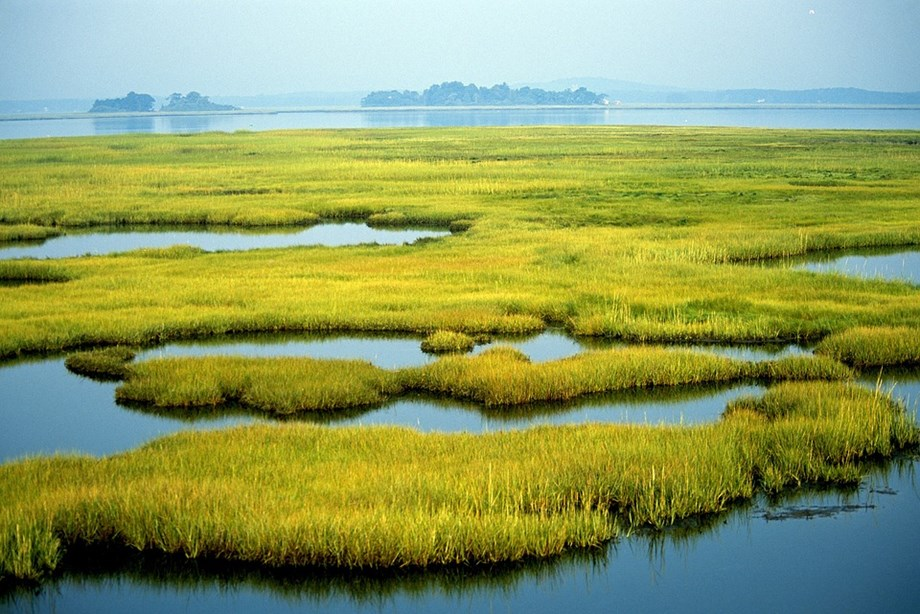 West Bengal minister says saving wetlands was topmost priority for government