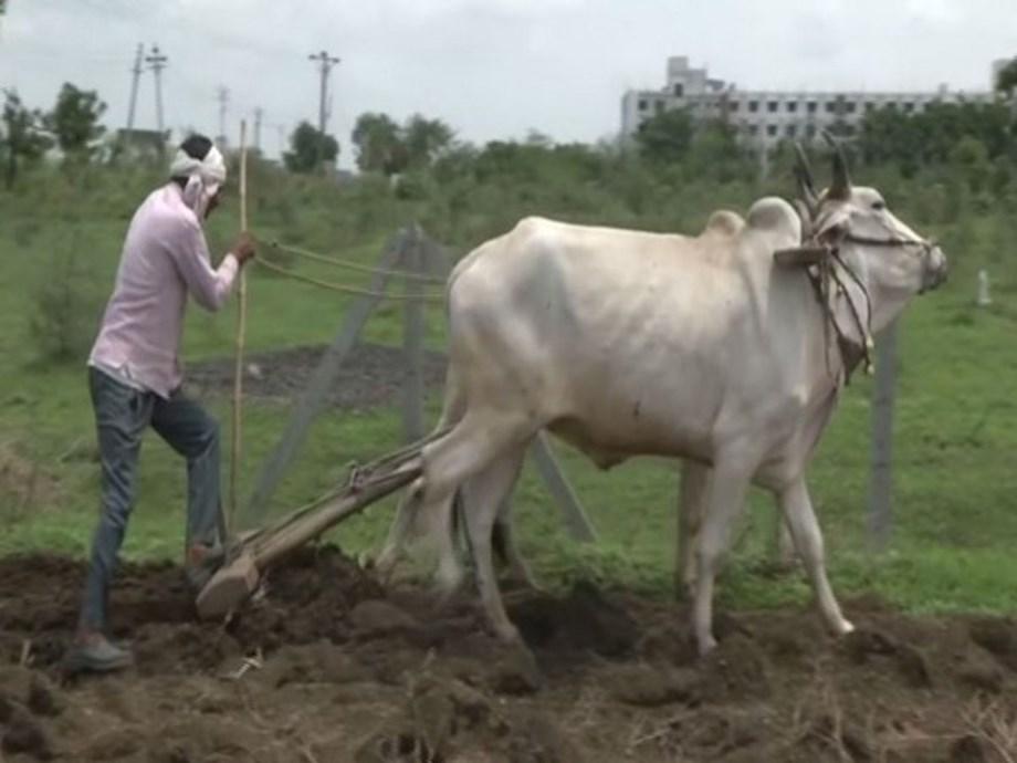 Nagpur: Delayed monsoon adds to farmers plight in Vidarbha