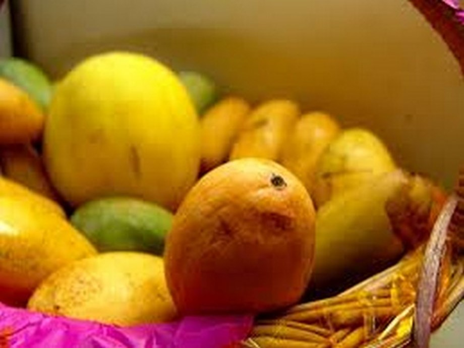 Indian man faces trail in Dubai for stealing mangoes
