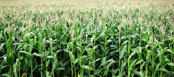 Tamil Nadu govt Pongal gift to farmers as 14 new crop varieties