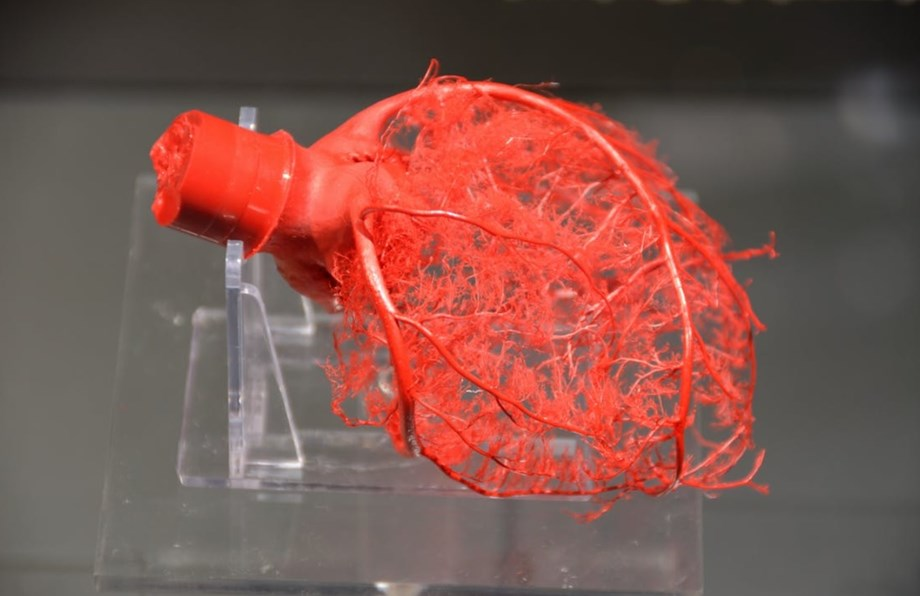Researchers discover vital ingredient for right formation of blood vessel