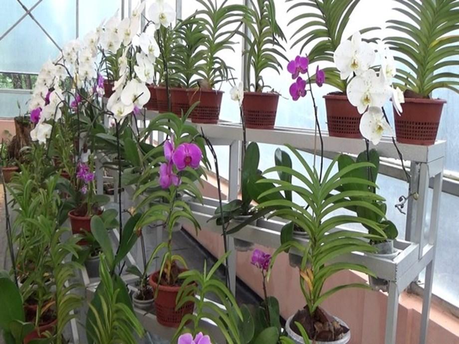 Shillong gets its first ever orchidarium