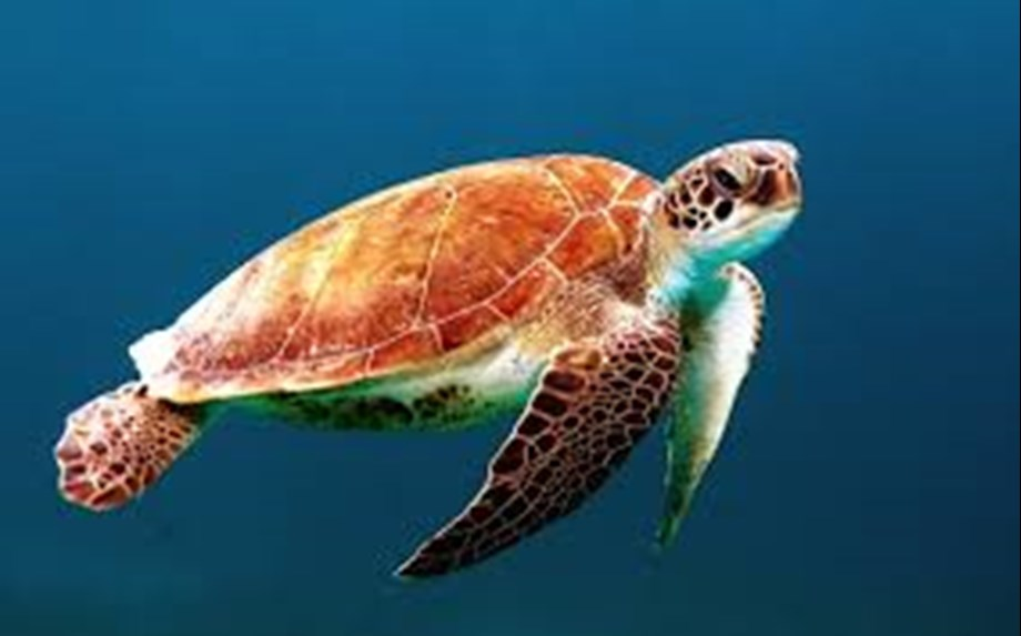 Police recovers over 250 terrapin turtles