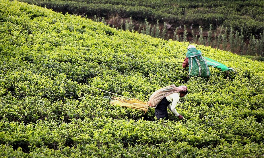 Centre planning to review situation of farmers with pan-India survey