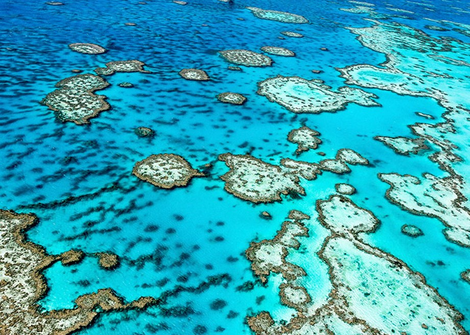 Australian Government Appoints Chief Executive for Great Barrier Reef Marine Park Authority