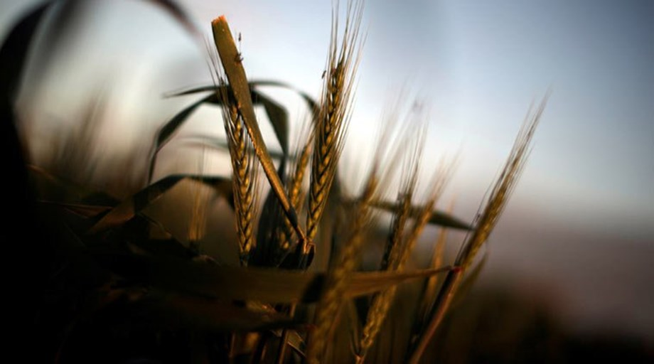 FAO approves India's proposal to observe International Year of Millets in 2023
