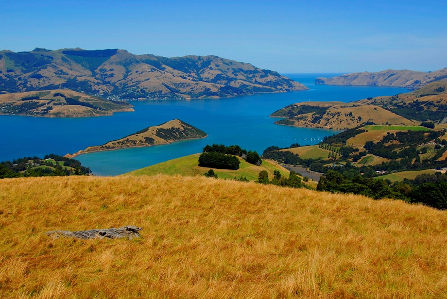 Omega lambs and fitbit cows: New Zealand responds to alternative protein threat