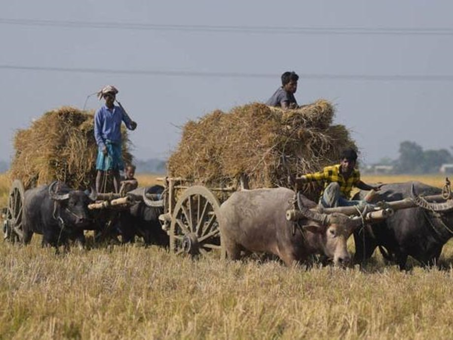 MP Cabinet gives nod to waive crop loans of 55 lakh farmers in state