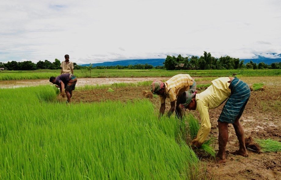 Odisha prepares a new Agriculture Policy
