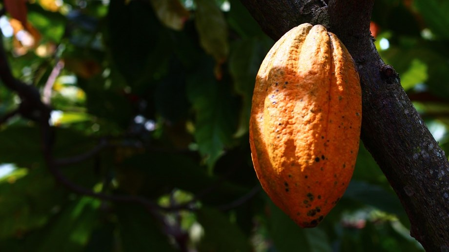 "Mars aims to tackle ""broken"" cocoa model with new sustainability scheme"
